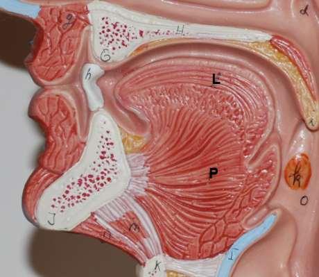 Verlegung der Atemwege, zurückgefallene Zunge
