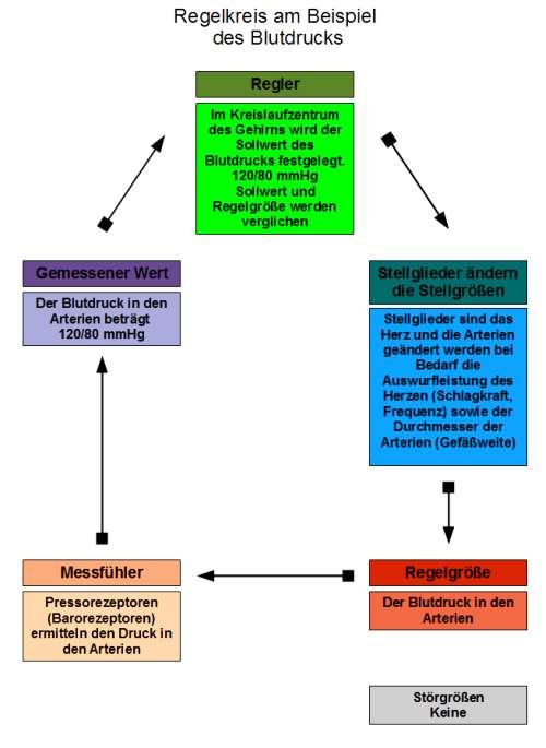 pdf еология и перспективы нефтегазоносности
